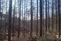 울진국유림관리소 2021년 숲가꾸기사업 착수